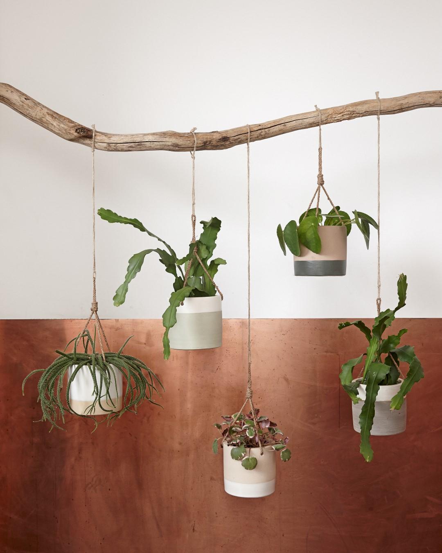 Woonkamer planten in pot ~ artikill.com